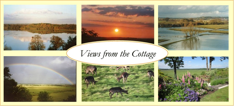 Photo mosaic of views from the cottage